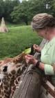 Feeding Giraffe2